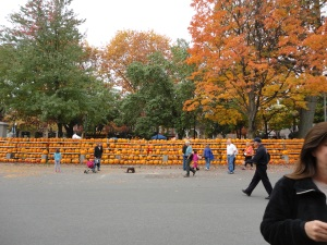 The center of Keene has all the pumpkins carved by local school children