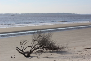 Trees were growing out of the beach very cool