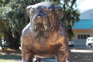 Bull Dog covered with pennies for the Humane Society