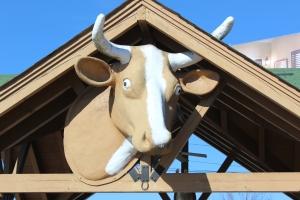 Big cow head