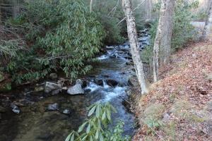 Stream in Pisgah State Park