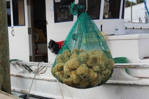 His sponge catch