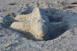 Sand Alligator
