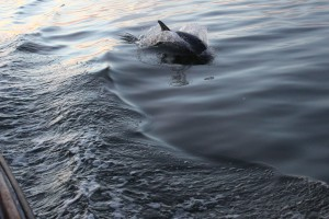 My dolphin shot!!!