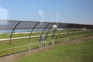 These fences curve inward because apparently alligators can climb a 6 foot fence...yikes!!