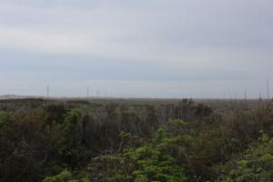 Pea Island