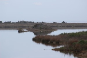 Pea Island Bird Sancturary