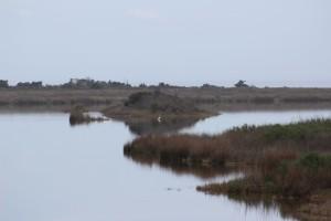 Pea Island Bird Sancturary