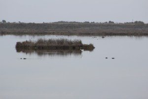 Pea Island Bird Sanctuary