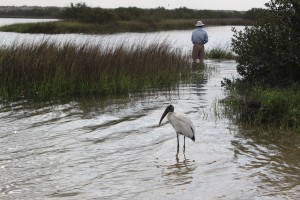 Wood Stork hanging out where we put in ..looking fro some fish