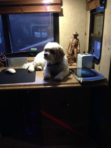 Hobie making himself at home on our desk. I can't beleive Lee let him up here
