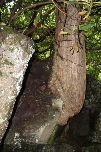 Very cool tree growing out of this rock...nature always finds a way