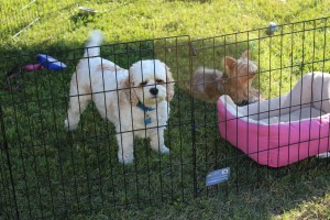 Hobie and Laci Lou in Sue's doggie daycare