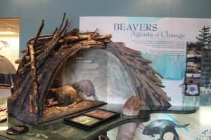 This beaver exhibit was pretty neat and educational. Later I saw an unusal beaver dam and recognized it because of this display