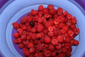 Raspberries and the one blackberry (identified by Howard) that I found. Yummy!!