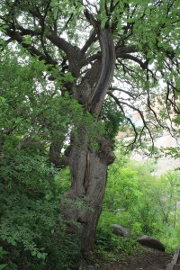 Lots of old beautiful trees and as a tree lover this one really spoke to me