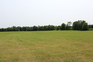 Field recently mowed for hay