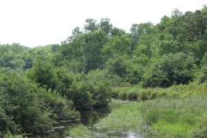 Wild Rice Creek