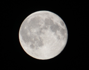 Lee's Blue Moon pic
