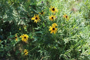 Pretty flowers outside