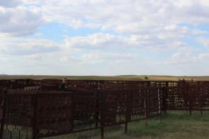 This fun maze was next to the antelopes