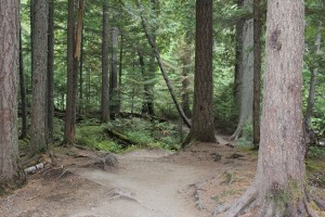 The deep woods of the middle part of the trail