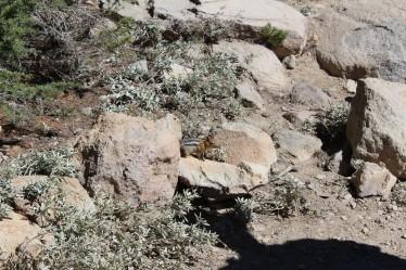 Chipmunk catches site of Lee