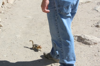 Chipmunk walks right up to him brazen as you please