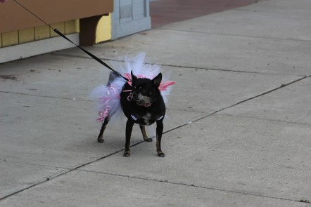 They had a dog costume contest also