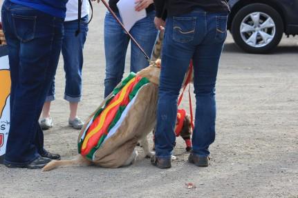 A hot dog!!