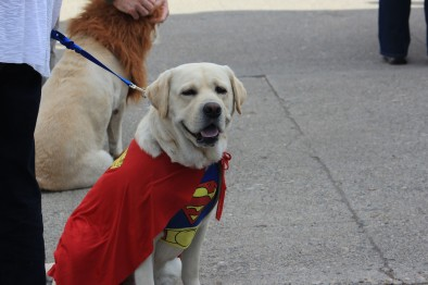 This dog looked super!!