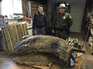 Me and Ranger Tom in front of a Burl that was stolen and recovered. These are used to make clocks and the street value is $1K the retail is $5K. The rangers protect the forests from people poaching them