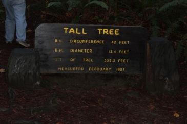 Tall Tree Stats