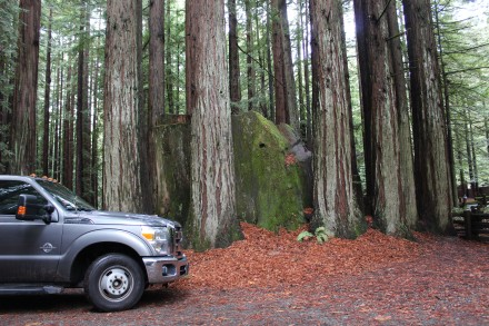 To give you some scope of the size check out our truck next to that stump