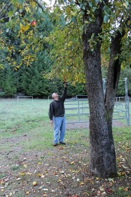Lee picking me apples