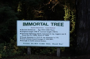 The stats on the Immortal Tree