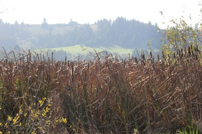 I loved the huge groups of cattails