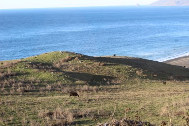 I also loved the cows grazing on hillsides. Do you think their meat has a salty flavor??