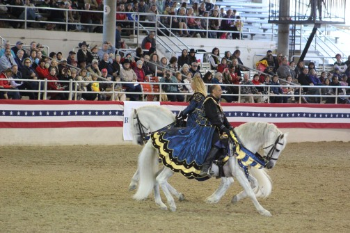 A presentation by Medieval times who ride pure Spanish breeds