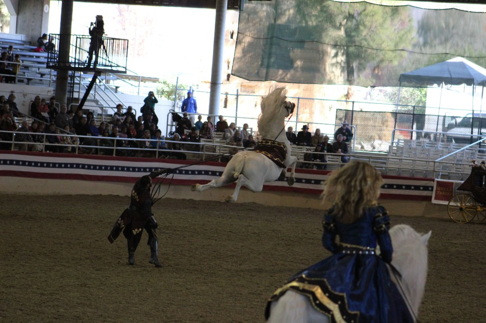 This horse was taught to jump completely in the air and I got the shot!!