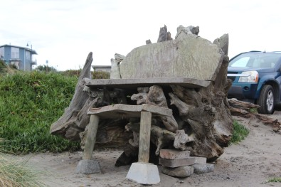 Very cool drift wood chair at Trinidad beach