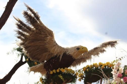 Nice eagle
