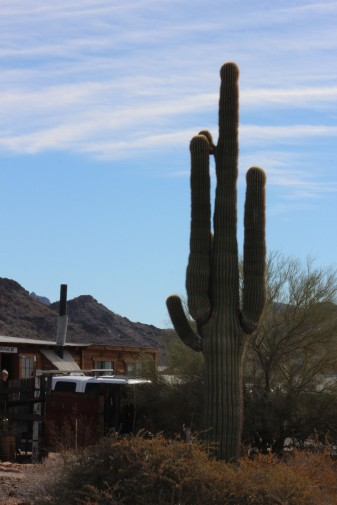 The outside was not much to look at but did have some really cool cacti around