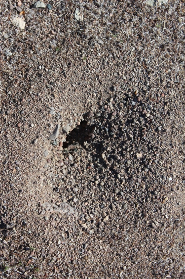 Some fire ant hills