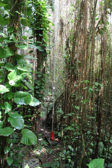The rainforest was amazing