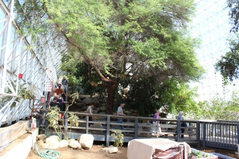 Some trees were brought in as saplings (such as this one) and have grown and many others have grown by natural methods