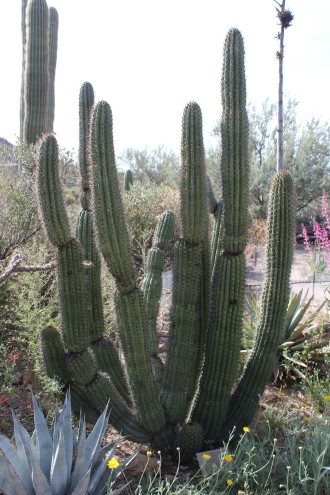 Really liked the organ cactus