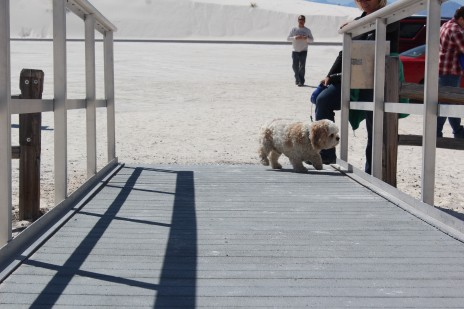 Hobi was a bit tentative about the boardwalk