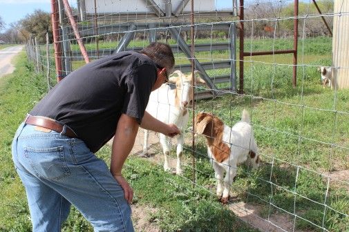 Lee playing with the two baby goats