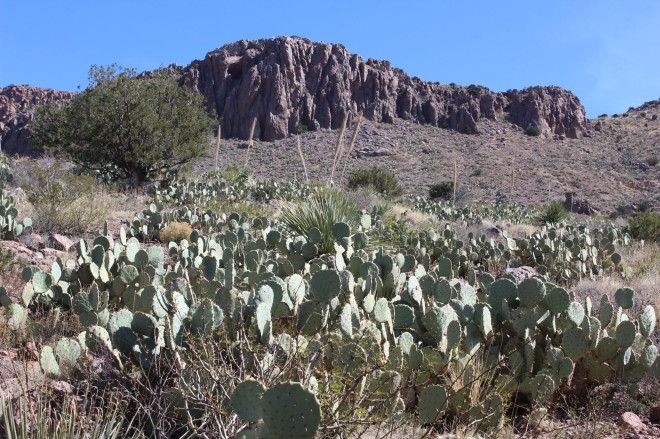 The surronding mountains and cacti were great